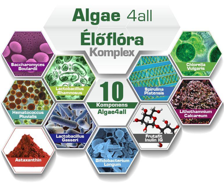 One Year Probiotikum+ 4 féle Alga 4 all